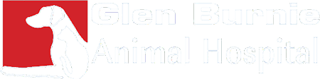 Glen Burnie Animal Hospital Home